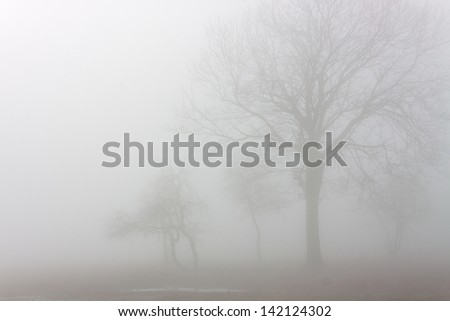 landscape park in the fog early spring