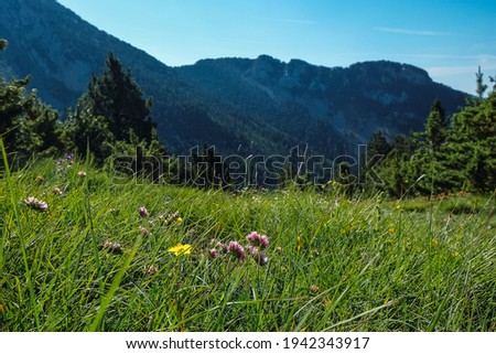 landscape pedraforca valley in spring Zdjęcia stock ©
