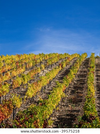 Landscape Photo : Beautiful view over the Port Wine vineyards in Douro, Portugal on Fall / Autumn.