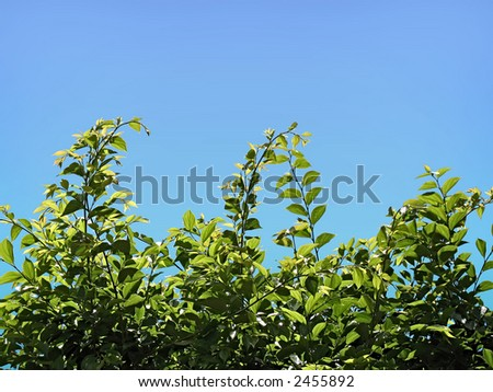 Landscape photo of an overgrown hedge.