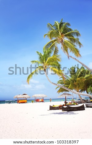 Landscape photo of Coconut trees and couches on white sand beach with blue sky