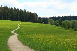 Landscape photo of zigzagging path through meadow with yellow flowers, forest in background, two cyclists in distance