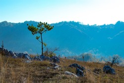 Landscape photography, one lonley tree in the middle of a rocky field, autumn background in the mountains, cold, serene fall colors (taken at