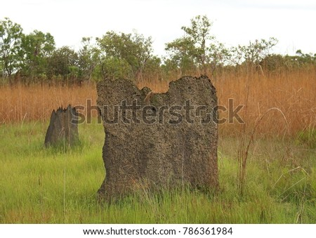Landscape picture of a large magnetic termite mound surrounded by grass with long orange grass in the background taken in the bush, Northern Territory, Australia