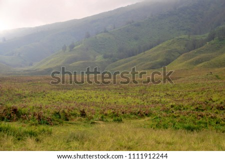 Landscape pine tree on the slope of mountain and valley of blok savana of bromo tengger semeru national park , indonesia