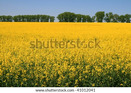 landscape, rapeseed field - Poland