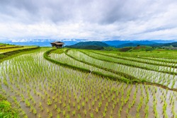 Landscape rice field in pa pong pieng , Mae Chaem, Chiang Mai, Thailand