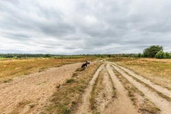 Landscape Rozendaalse Veld in the Dutch province of Gelderland during the drought 2018 views over dried grass, old ox cart traces and solitary trees against dark cloudy sky