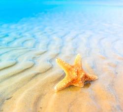 Landscape Sand Fish