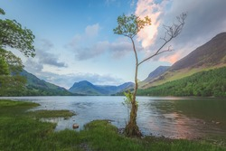 Landscape scenery of a small lone birch tree at Buttermere Lake with Fleetwith Pike at sunset or sunrise in the Lake District, Cumbria, England.