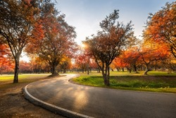 Landscape Scenery of Autumn Fall Leaves Forest Background, Colorful of Autumn Trees Leaf With Footpath Road at Sunset Scene. Woodland Environment With Autumn Leaves Foliage of Public Park. Nature Park
