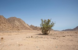 Landscape scenic view of desolate barren eastern desert in Egypt with lone tree and mountains