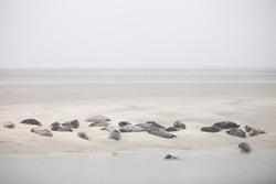 Landscape sea Baie de Somme Seals