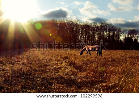 Landscape shot of a horse grazing at sunset.
