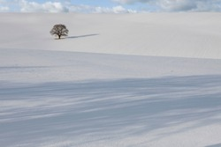 Landscape shot of a lonely dried-up tree out in the field covered entirely with snow on a cold winter morning