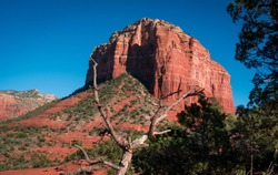 Landscape shot of peaceful red Bell Rock Butte behind dead tree in Sedona Arizona. No people. Afternoon daylight with contrast of red sandstone and blue sky. Copyspace-