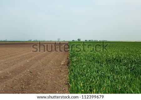 landscape shots of  farm land near chatteris set in the Cambridgeshire Country Side England