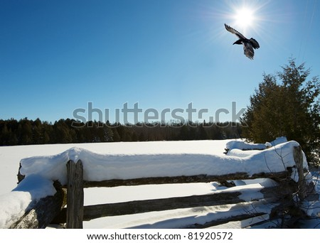 Landscape.  Snow covered pasture on a bright, sunny, cold winter afternoon with a raven passing over.