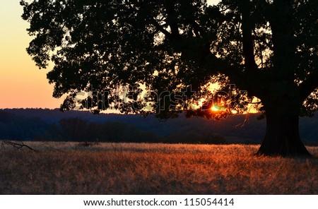 Landscape, sunny dawn in a field