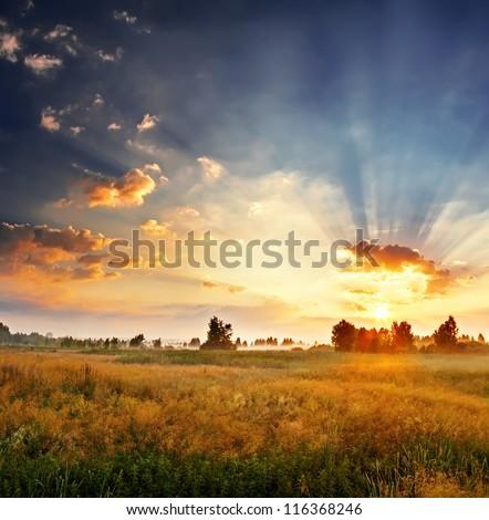 Landscape, sunny dawn in a field #116368246