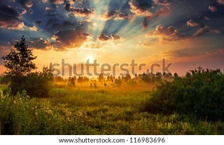Stock Photo Landscape, sunny dawn in a field
