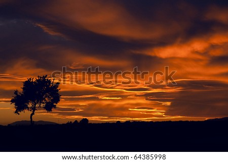 landscape : sunset with cloudy orange sky and silhouette of tree