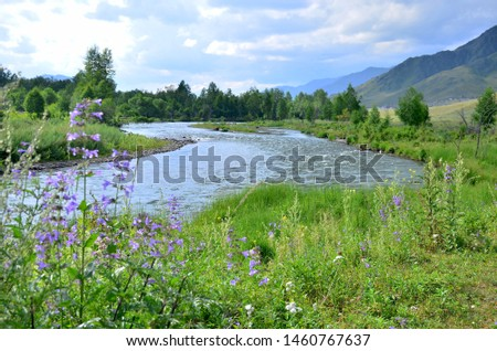 Landscape the mountain river of the mountain of a plant and trees against the background of the sky with clouds
