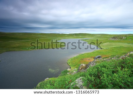 landscape tundra / summer landscape in the north tundra, moss, ecosystem