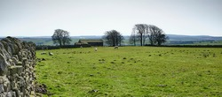 Landscape view across Nidderdale with traditional farm and pastures