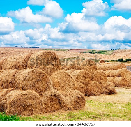 landscape view of a farm field with gathered crops - stacks of wheat