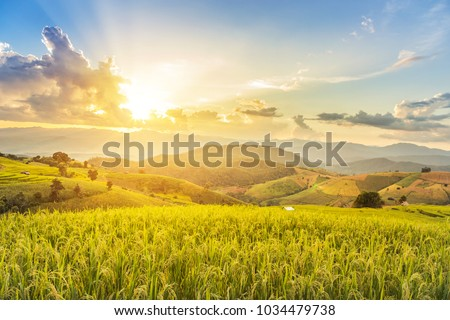 Landscape view of green terraced rice field in Pa Pong Pieng , Mae Chaem, Chiang Mai, Thailand on sunset time.