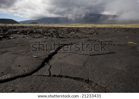 Landscape view of mauna kea lava fields with early plant growth