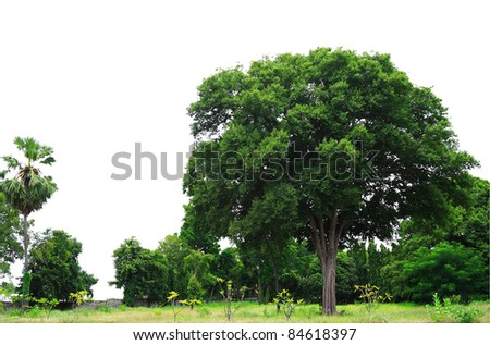 Landscape view of park isolated on white background