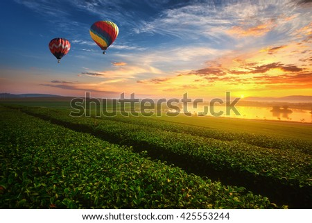 Landscape view of sunrise at green tea field with balloon. - Shutterstock ID 425553244