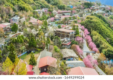 Landscape View Of The Smangus Tribe (Qalang Smangus, The Tribe of God) With Beautiful Sakura Blooming From The Observation Deck On The Hilltop At Sunrise, Jianshi, Hsinchu, Taiwan