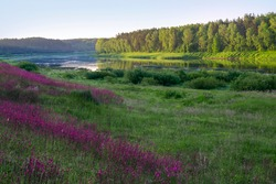 """Landscape view on the bend of Daugava river and meadow with summer flowers at Naujene parish, Daugavpils district, Latgale region, Latvia, which is a part of Nature Park """"Daugavas Loki"""""""