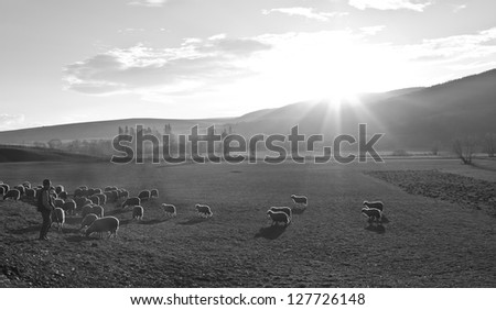 landscape with a flock of sheep and shepherd - stock photo