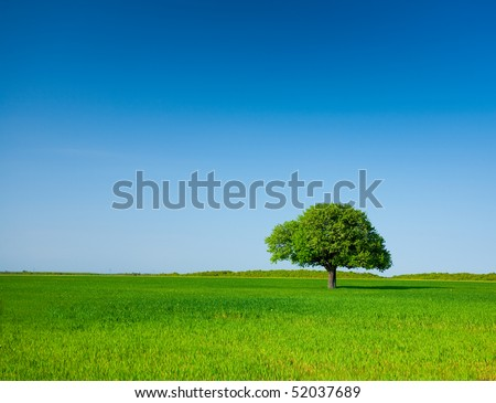 Landscape with a lonely tree in a wheat field under clear blue sky