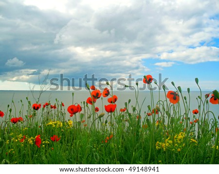 stock-photo-landscape-with-a-poppy-field-the-sea-and-blue-sky-49148941.jpg