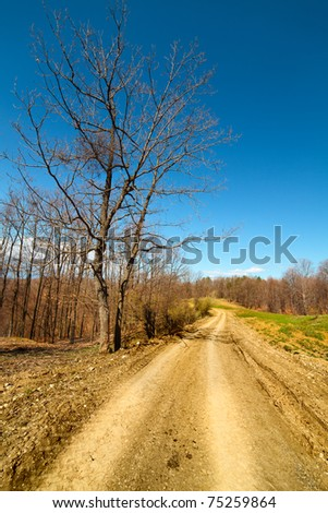 Landscape with a rural dirt road going near forest