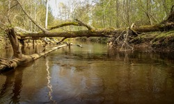 landscape with a small wild river bank, fallen tree trunks crossing the river, first spring greenery, view from a fishing boat, Sedas river, Latvia