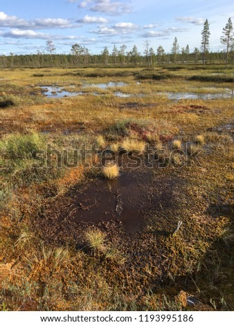 landscape with a swamp in the tundra beyond the Arctic Circle ( Puha - Luosto national park, Finland) Stock fotó ©