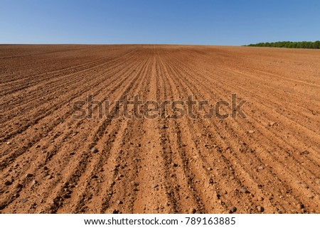 Landscape with agricultural land, in slope, recently plowed and prepared for the crop, with a plantation of pines in the background