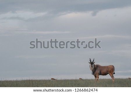 Landscape with animal in  Massai Mara #1266862474