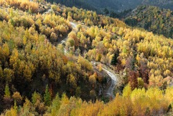 Landscape with autumn colorful foliage and winding road on Mount Gramos in northwestern Greece