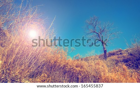 Landscape with bare tree and sun shining through dry bushes (cross process lighting color effect)