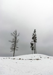 landscape with bare tree silhouettes on a monotonous and gray background, cloudy winter day