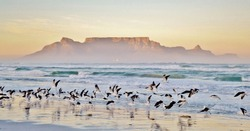 Landscape with beach and Table mountain at sunrise