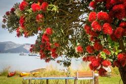 Landscape with blooming pohutukawa tree and beautiful ocean bay with colourful kayaks at Hakanaka Bay, next to Picton, New Zealand