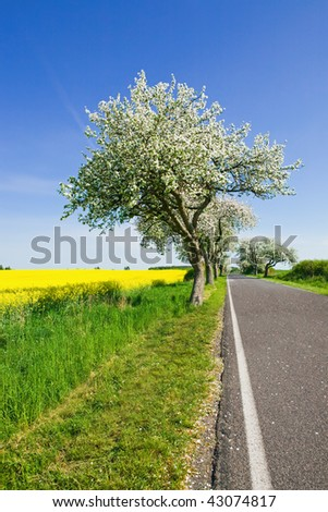Landscape with blossom apple tree, rapeseed flower field, road and blue sky